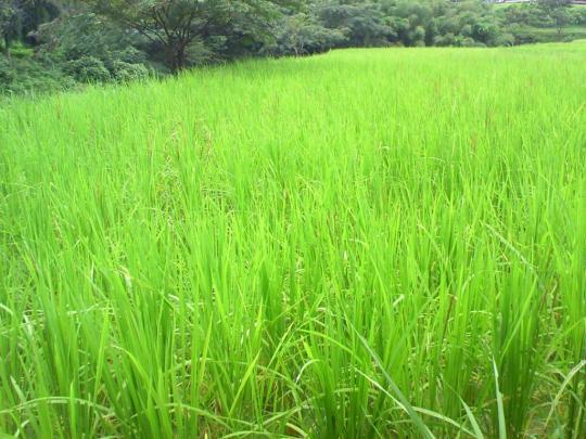 33枚の田んぼで育むお米